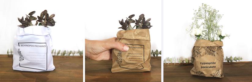 cajas-para-flores-y-plantas-2