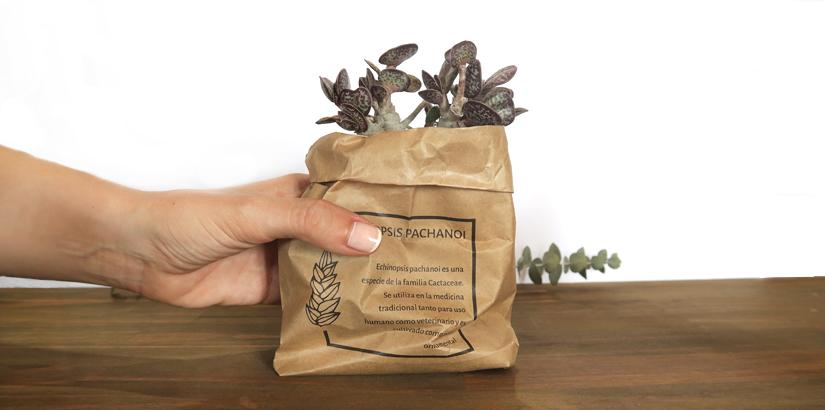 cajas-para-plantas-pequeñas-PPAL