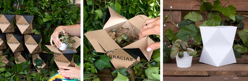 cajas-personalizadas-para-cactus-3